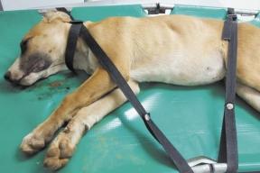 Animal atropelado em junho teve de ser socorrido por populares. Prefeitura não teria respondido às ligações para o socorro