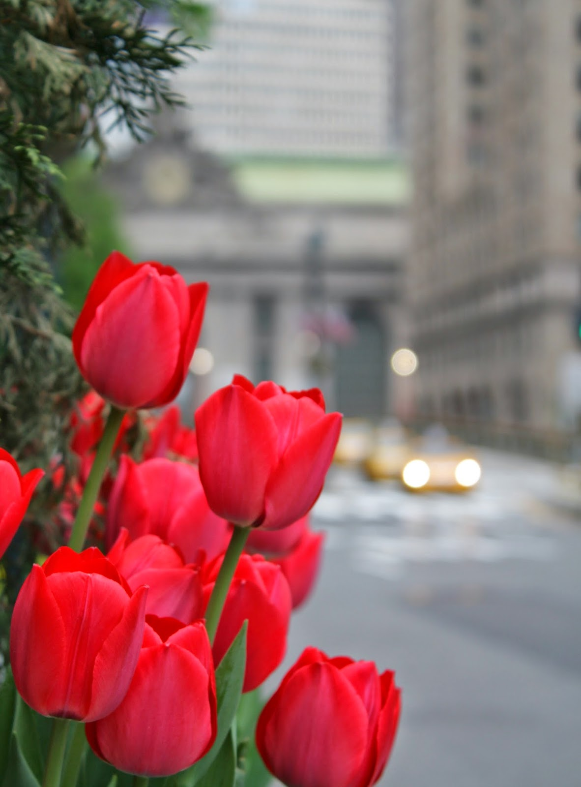 Tulipanes en New York
