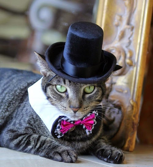 Halloween Costumes for Cats - The Aristocrat Top Hat Costume