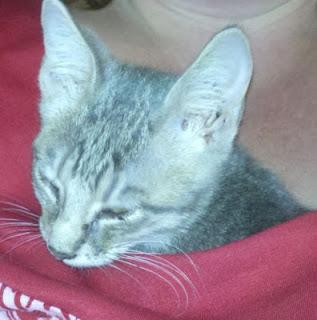 animal rescue, feral cat, feral kitten, rescue cat, cute kittens