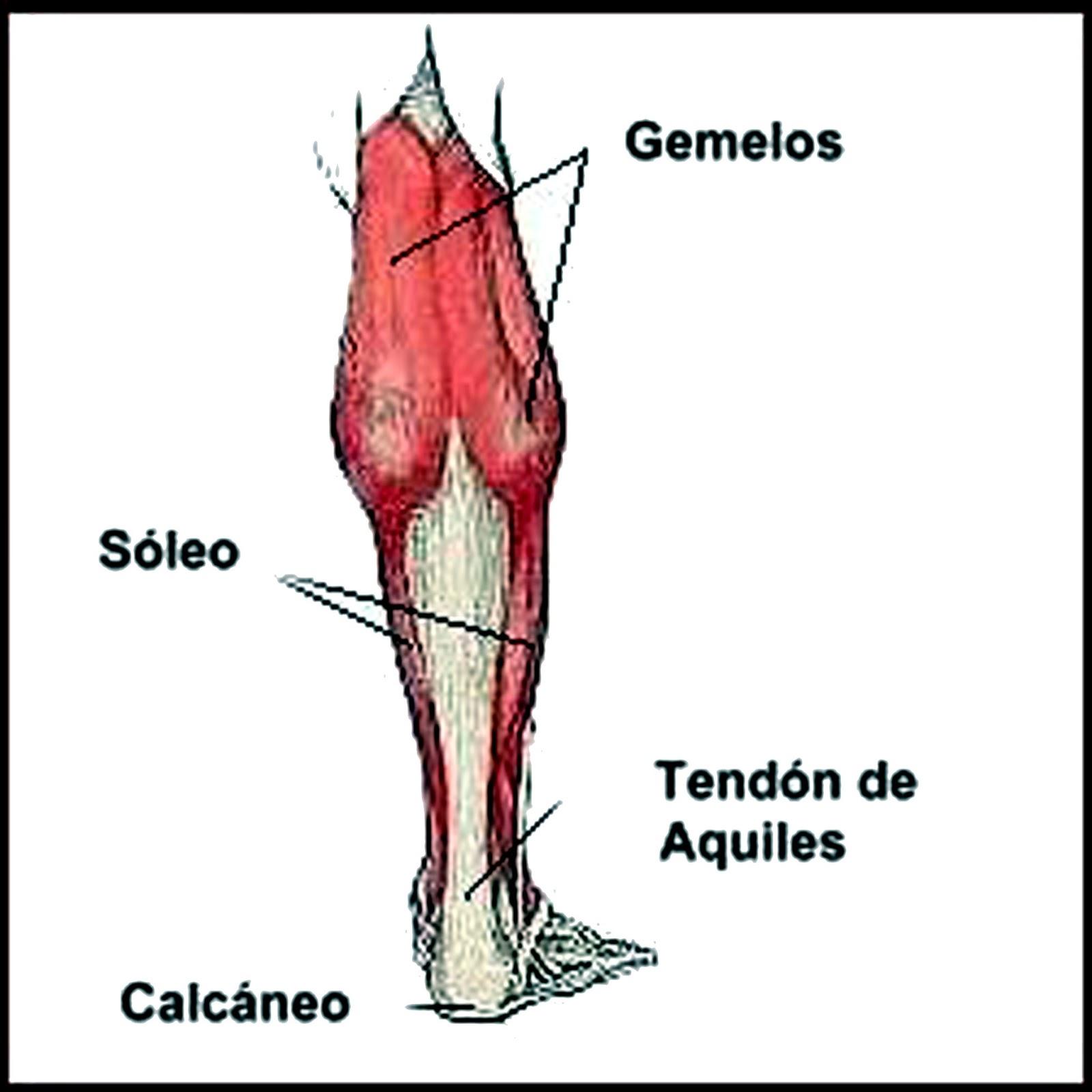 Gimnasio Kata: Tratamiento de la Tendinitis de Aquiles