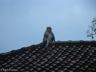 Ubud Monkey Forest Bali Photo 3