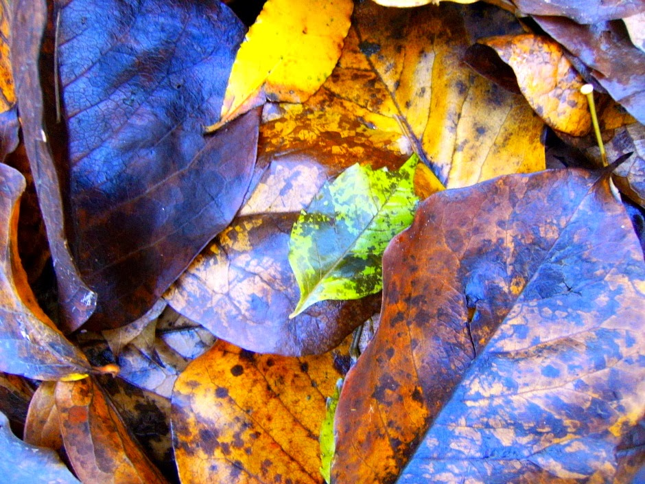 Tiziana rinaldi art autunno è un quadro astratto