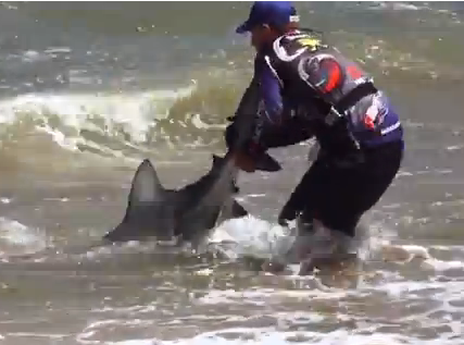south+africa+shark+sharks+video+videos+image+images+attack+attacks