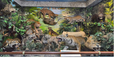 Rahmat International Wildlife Museum & Gallery Tourist Places in North Sumatra