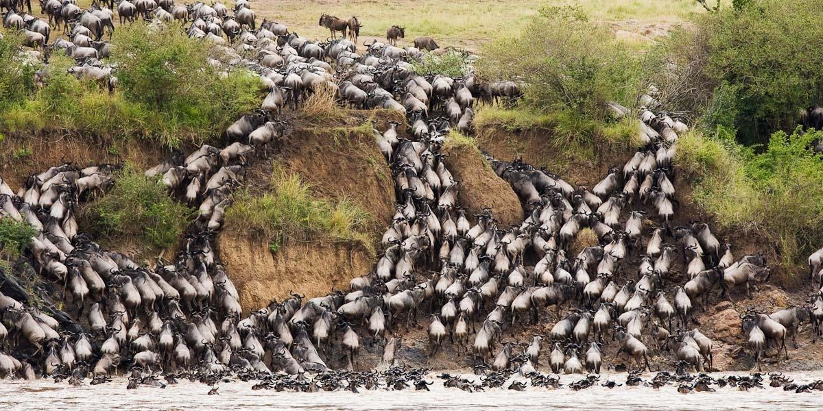 Beautiful Animals Safaris: The Amazing Great Wildebeest Migration ...