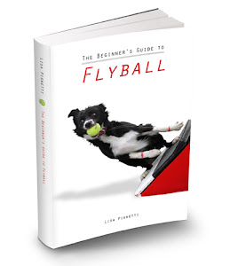 The Beginner&#39;s Guide to Flyball