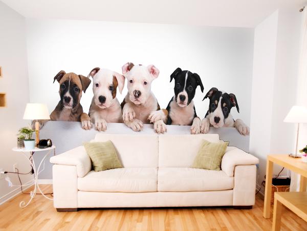 Sala con fotomural de perros salas y comedores for Decoracion con figuras en la pared