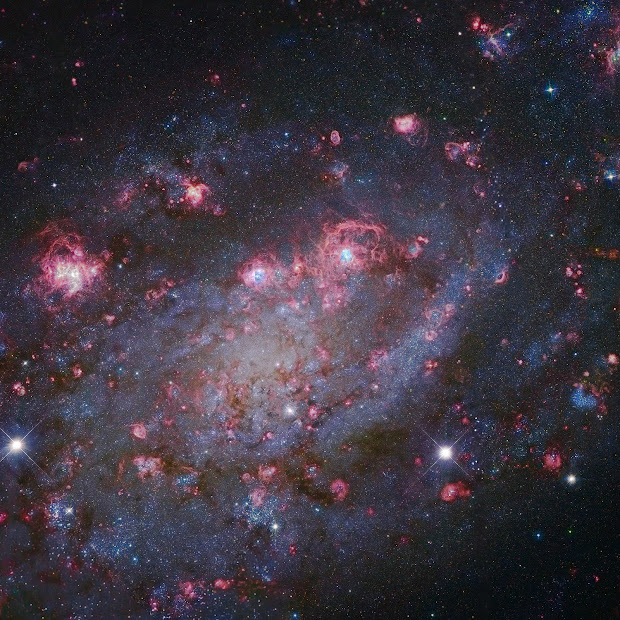 Spiral Galaxy NGC 2403 with Giant Star-Forming HII Regions