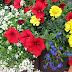 Letnie reminiscencje, czyli kwiaty w ogrodzie