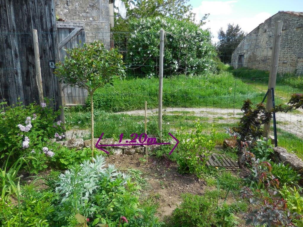 Cagouille 39 s garden un nouvel arbuste pour le jardin for Arbuste pour jardin