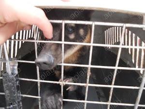VICTORIA!! 26 animales salieron del zoo de Oruro!