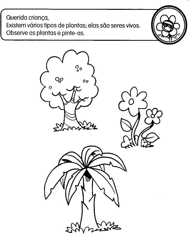 Suficiente ATIVIDADES DE EDUCAÇÃO INFANTIL SERES VIVOS | Cantinho do Educador  HO64