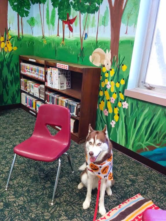 therapy dog husky