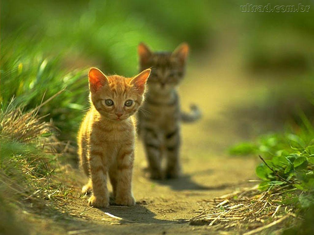 Fotos de gatos e imagens de gatinhos. GatosMania.com