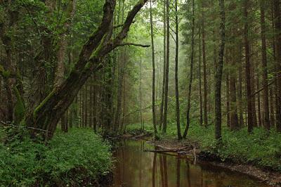 أجمل وأفضل صور, نهر في حديقة Tarvas Kõrvemaa الطبيعة في استونيا, أجمل الصور الطبيعية,