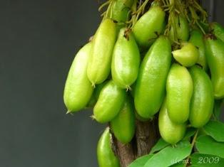 belimbing, belimbing wuluh, manfaat belimbing wuluh, belimbing sayur
