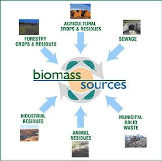 Biomass Struktur
