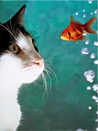 Cara Menolong Kucing Persia Anggora Tenggelam