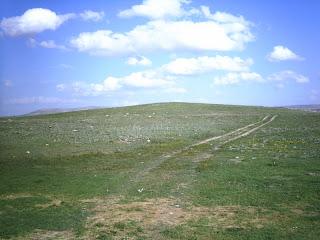 Türkiyede görülen bitki örtüsü
