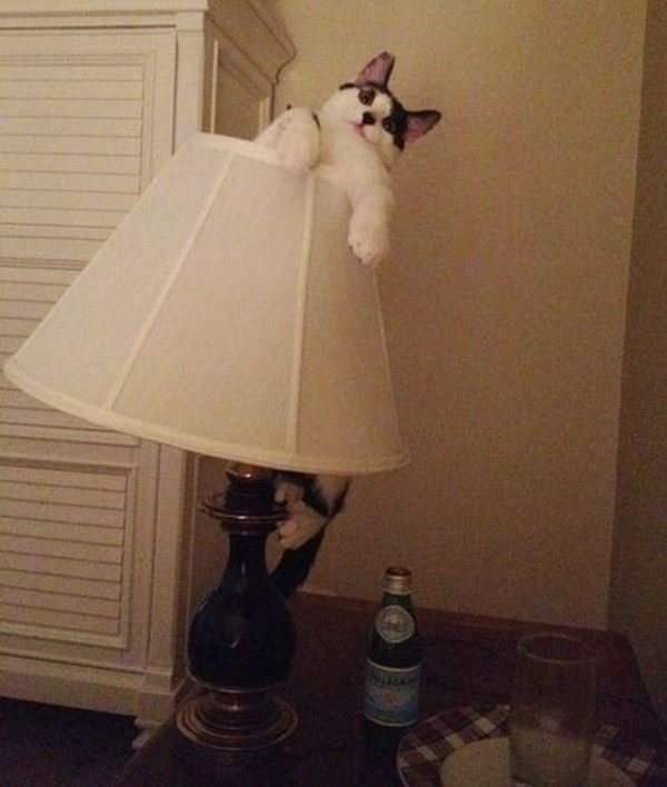 Funny cats - part 52, funny cat pictures, funny pictures of cats, cute cats, cat photos