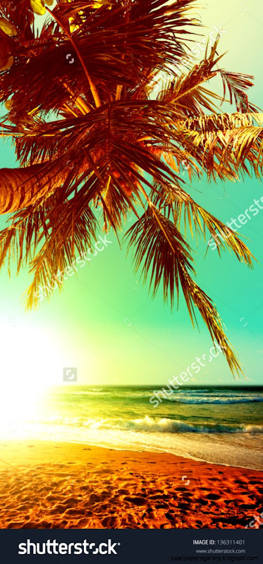 Tropical Beach Stock Photos Images  Pictures  Shutterstock