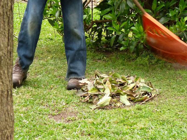 En el jardin tareas de octubre for Casa jardin 8 de octubre