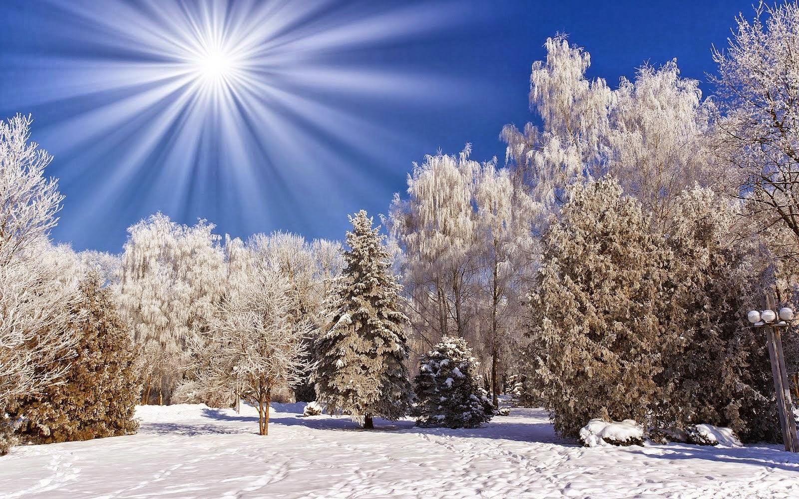 1200 navidad especial comienza ahora hasta el final de diciembre 3