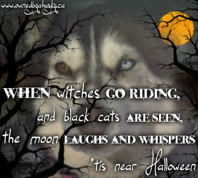 Huskies Halloween Graphic