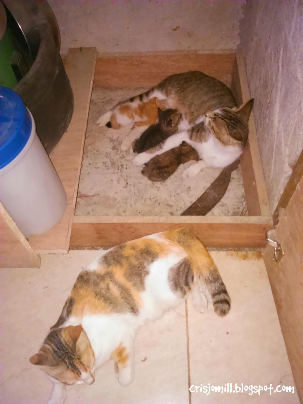 Cat39s Love SIMPLE DREAMER