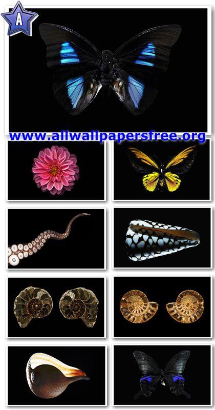 40 Minimalistic Nature Wallpapers 1920 X 1200