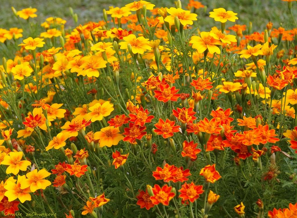 Znalezione obrazy dla zapytania kwiaty obrazek