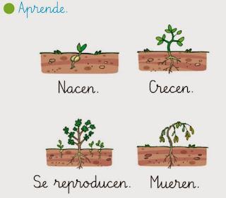 http://primerodecarlos.com/primerodecarlos.blogspot.com/febrero/plantas_seres_vivos.swf