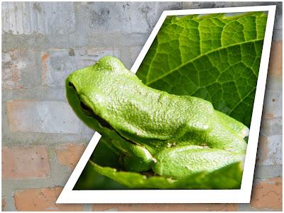 leaf+frog+OOB2.jpg