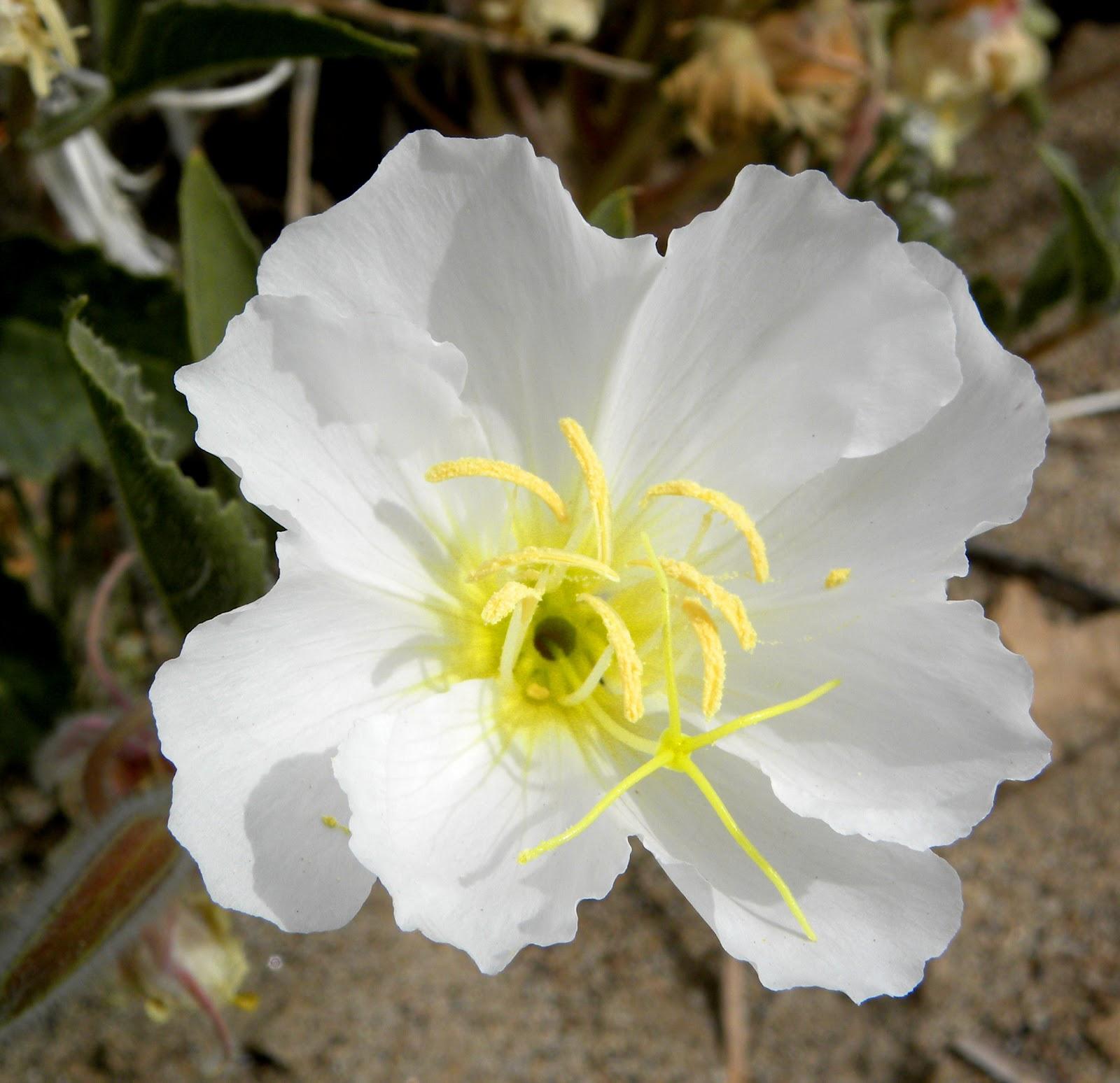 Flower Homes: Desert Flowers