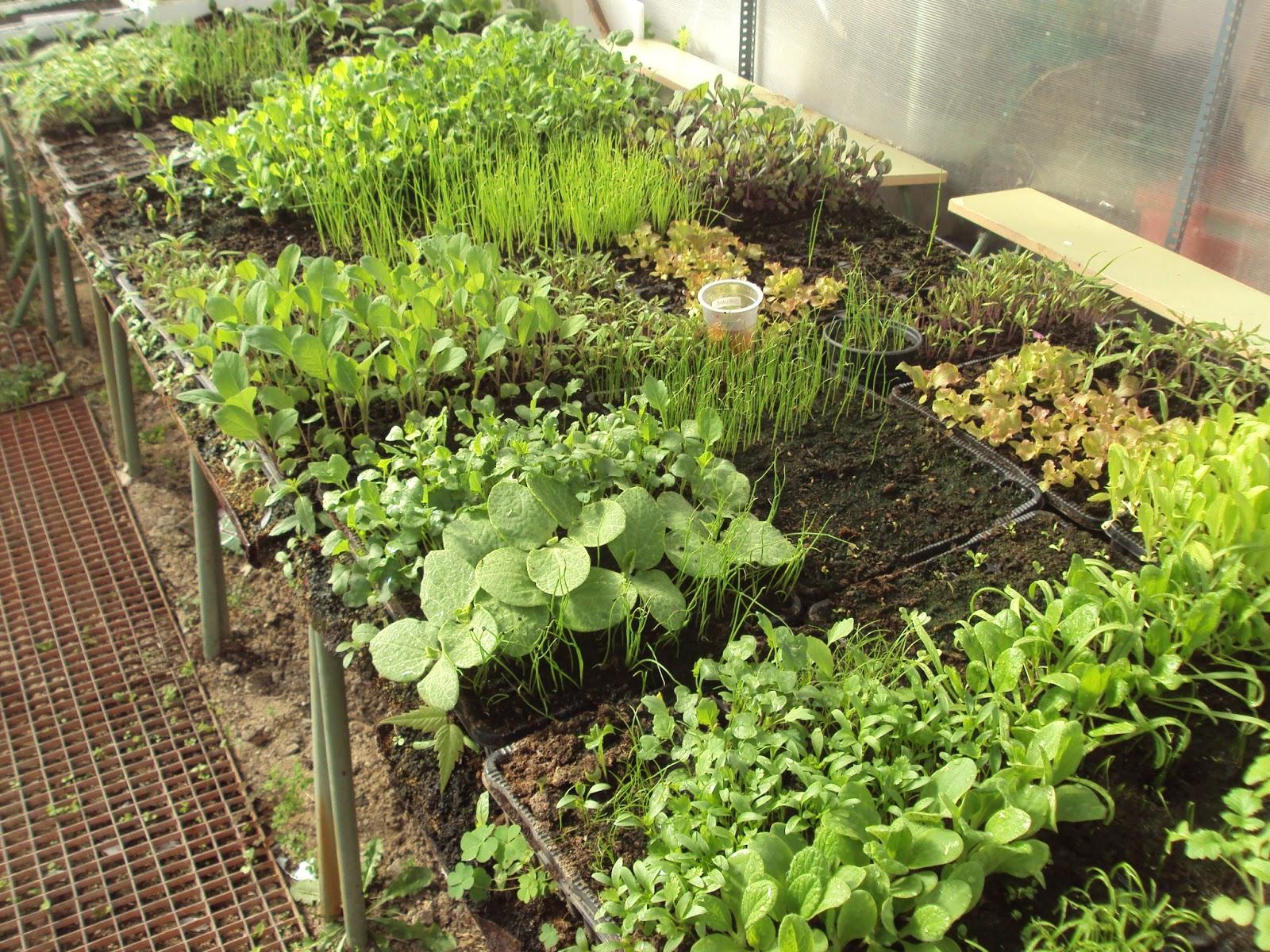 En torno al huerto la siembra en el terreno y el trasplante - Plantas de huerto ...