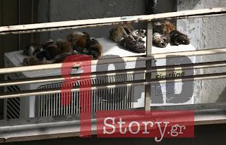 Φωτογραφία ΣΟΚ – Δέρματα ζώων σε μπαλκόνι μεταναστών..