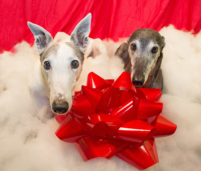 Blue and Bettina Greyhound with the red bow