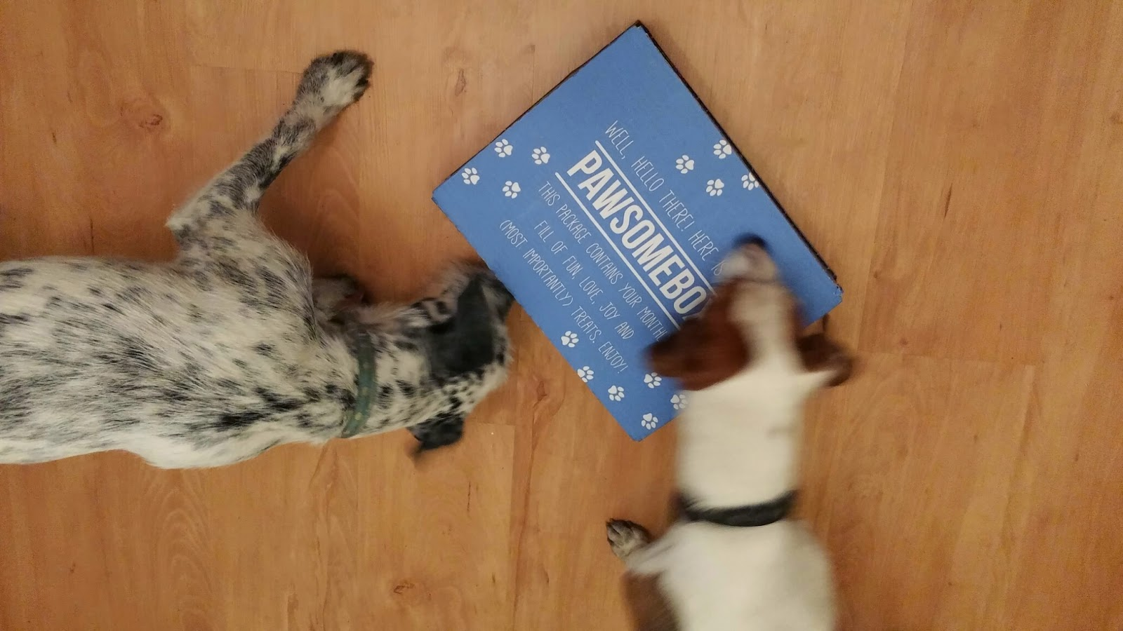 dogs and Pawsomebox