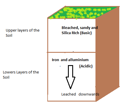 Top 10 processes of soil formation genetic disorders for What is rich soil called
