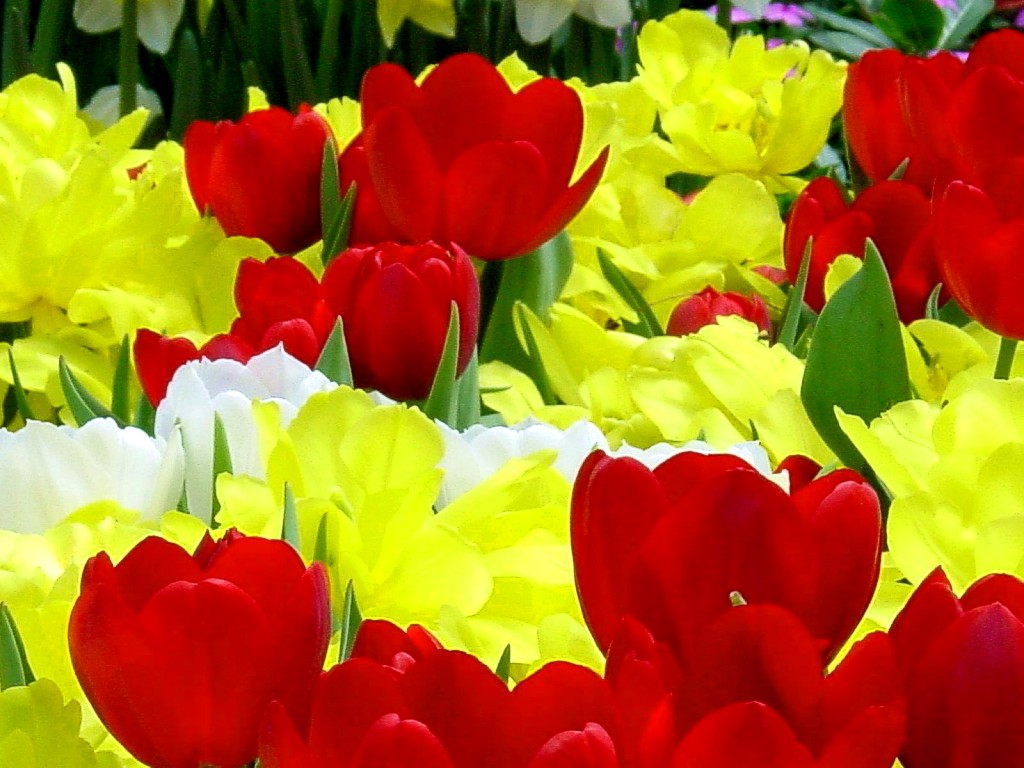 http://3.bp.blogspot.com/-bJs7z7wA8Zc/Tvd44bRlCPI/AAAAAAAAHyU/CpE7vx5N1aU/s1600/Flowers%2Bwallpapers..jpg