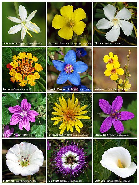 Morfologi bunga eka kartika morfologi bunga ccuart Image collections