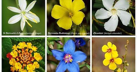 Hairiani Miiyanni Morfologi Tumbuhan Tentang Bunga