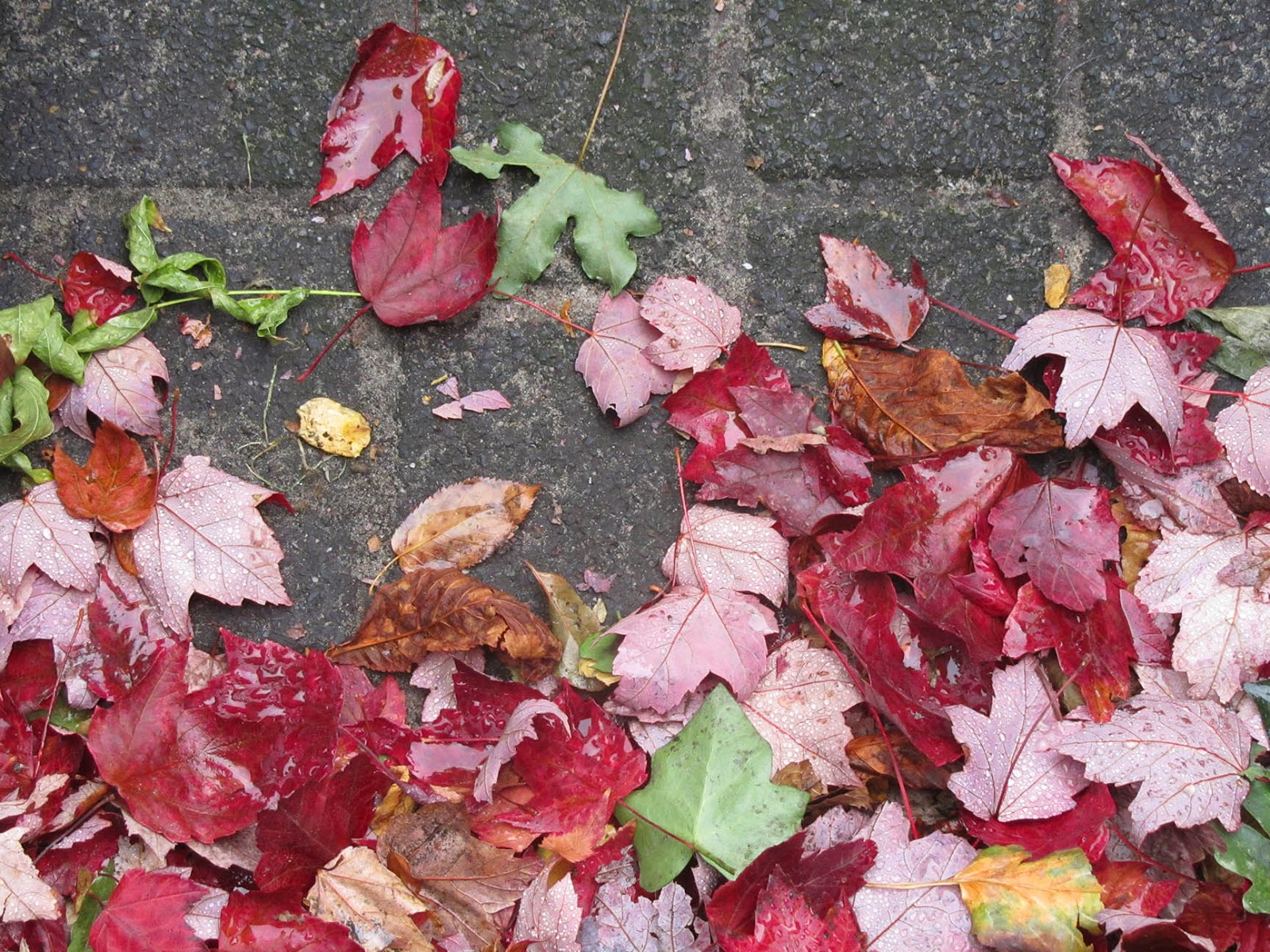red and green leafs on the street