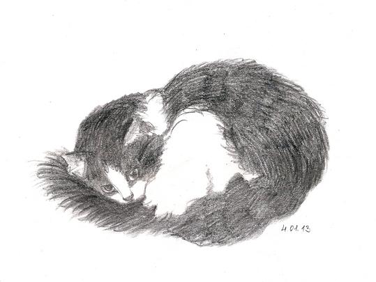 набросок кошки карандаш