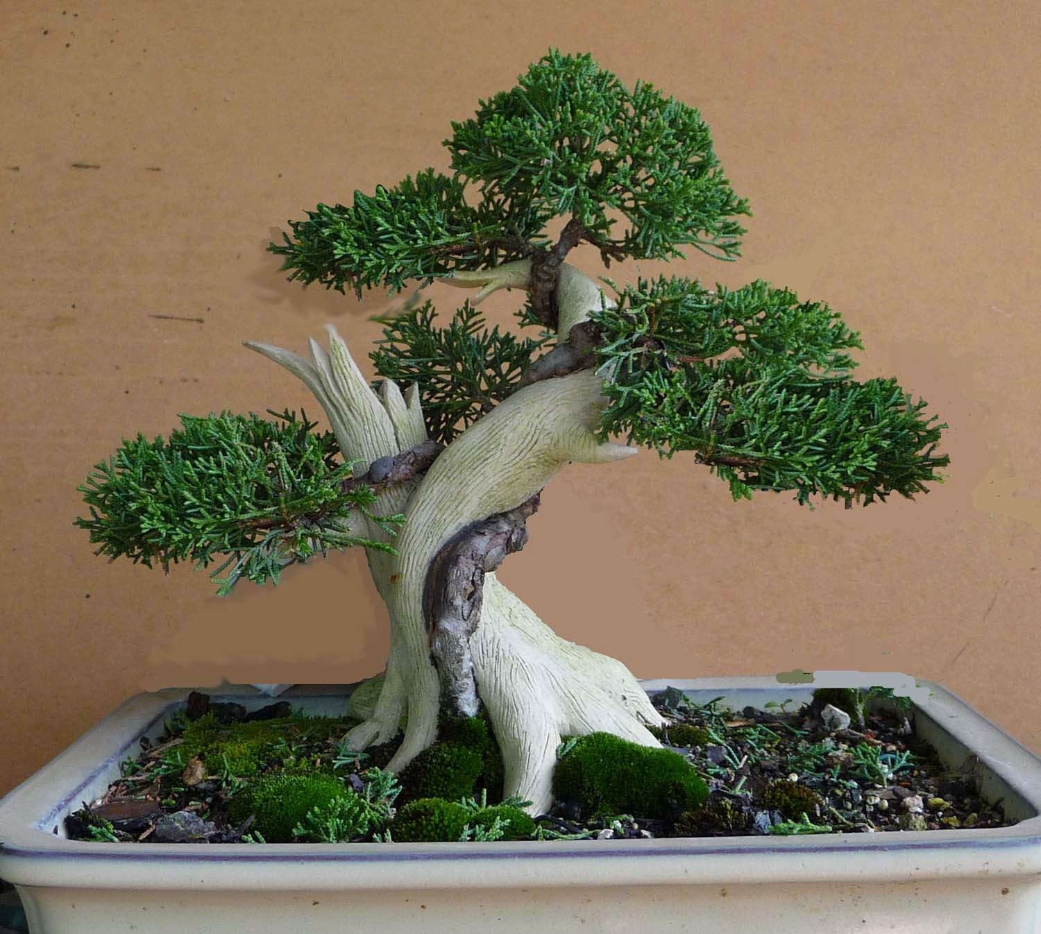 Bonsai Amp Pottery May 2014
