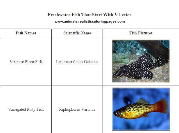 List of freshwater fish beginning with V