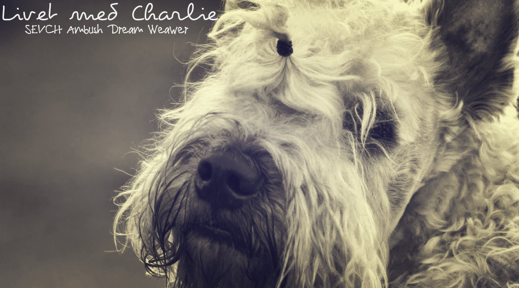 Livet med Charlie ©