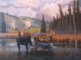 Canadian Moose picture