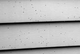 how to clean bird poop off siding